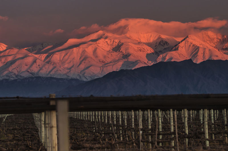 Mountain Andes Andes View Andes Mountains Wine Vineyard Malbec Agrelo Mendoza Argentina Sunrise Mountain Range Mountain Road Snowcapped