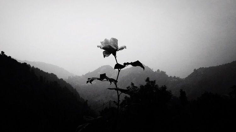 Гималаи. Nature Mountain Beauty In Nature India Dharamsala McLeod Ganj Dharamshala Followme Likeforlike #likemyphoto #qlikemyphotos #like4like #likemypic #likeback #ilikeback #10likes #50likes #100likes #20likes #likere Follow Mobilephotography Photomobile Photography Black And White Friday EyeEmNewHere