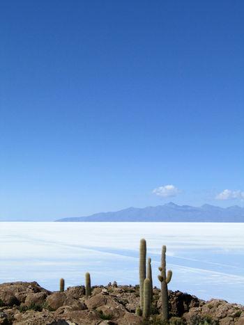 Isla Incahuasi, with Tunupa (volcano) in the background. Bolivia. Cactus Cloud Isla Incahuasi Rock Tunupa Salar De Uyuni Vulcano