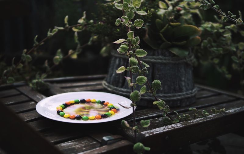 Again a picture with skittels. But from a different angle. Plant Nature Skittles Contrast Food Sweet Sweets Outdoors Potted Plant Flower Close-up No People Growth Green Rainbow Colours Plate Water Moving Ideas Leaves Food Stories