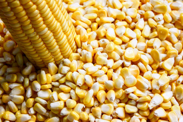 Agriculture Backgrounds Cereal Plant Close-up Corn Corn - Crop Crop  Food Food And Drink Freshness Full Frame Healthy Eating Indoors  No People Raw Food Seed Snack Sweetcorn Vegetable Vegetarian Food Wellbeing Yellow