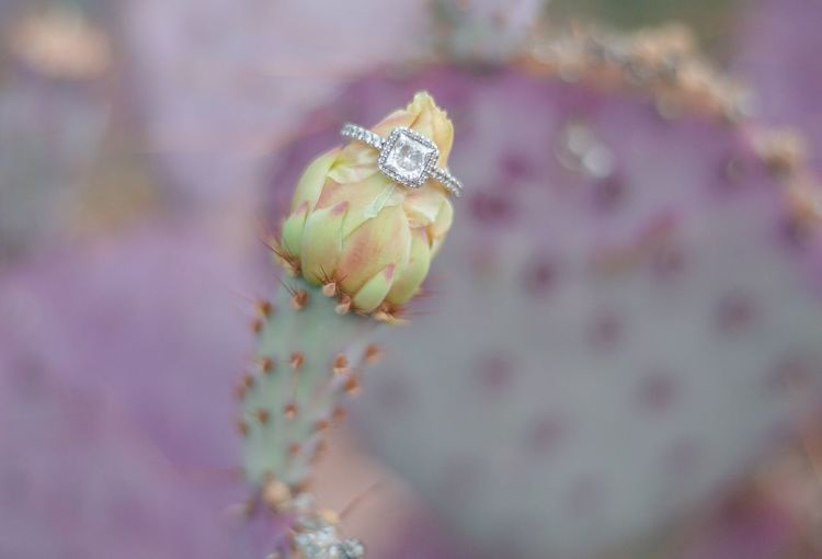 Close-Up Of Ring On Flower Head