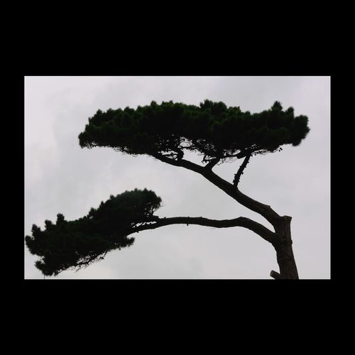 Pin parasol pour jour de pluie... Arbre Trees Treescollection Silhouette EyeEmBestPics EyeEmbestshots EyeEm Nature Lover Tree_collection  Tree Silhouette