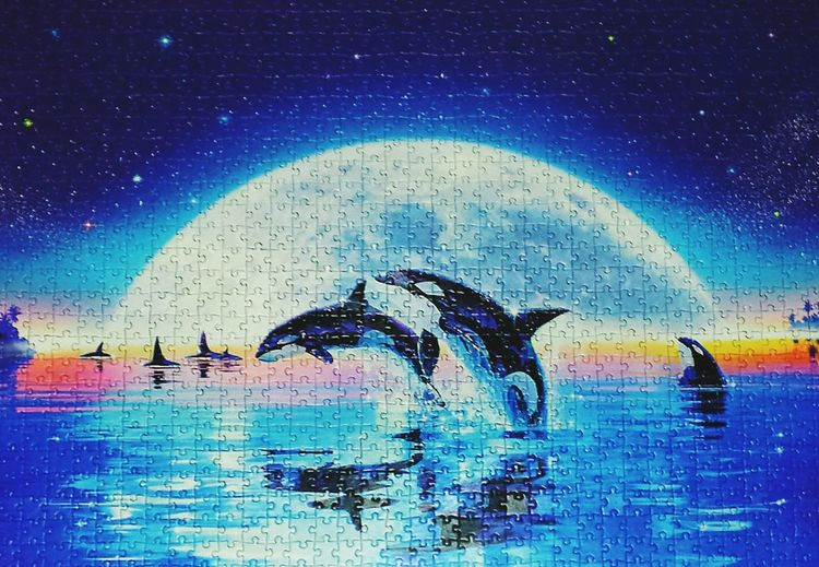 Technology Backgrounds Sky Puzzle  Delphin Delphins Moonlight Moon Nightphotography Night Sea Sea And Sky Landscape_Collection