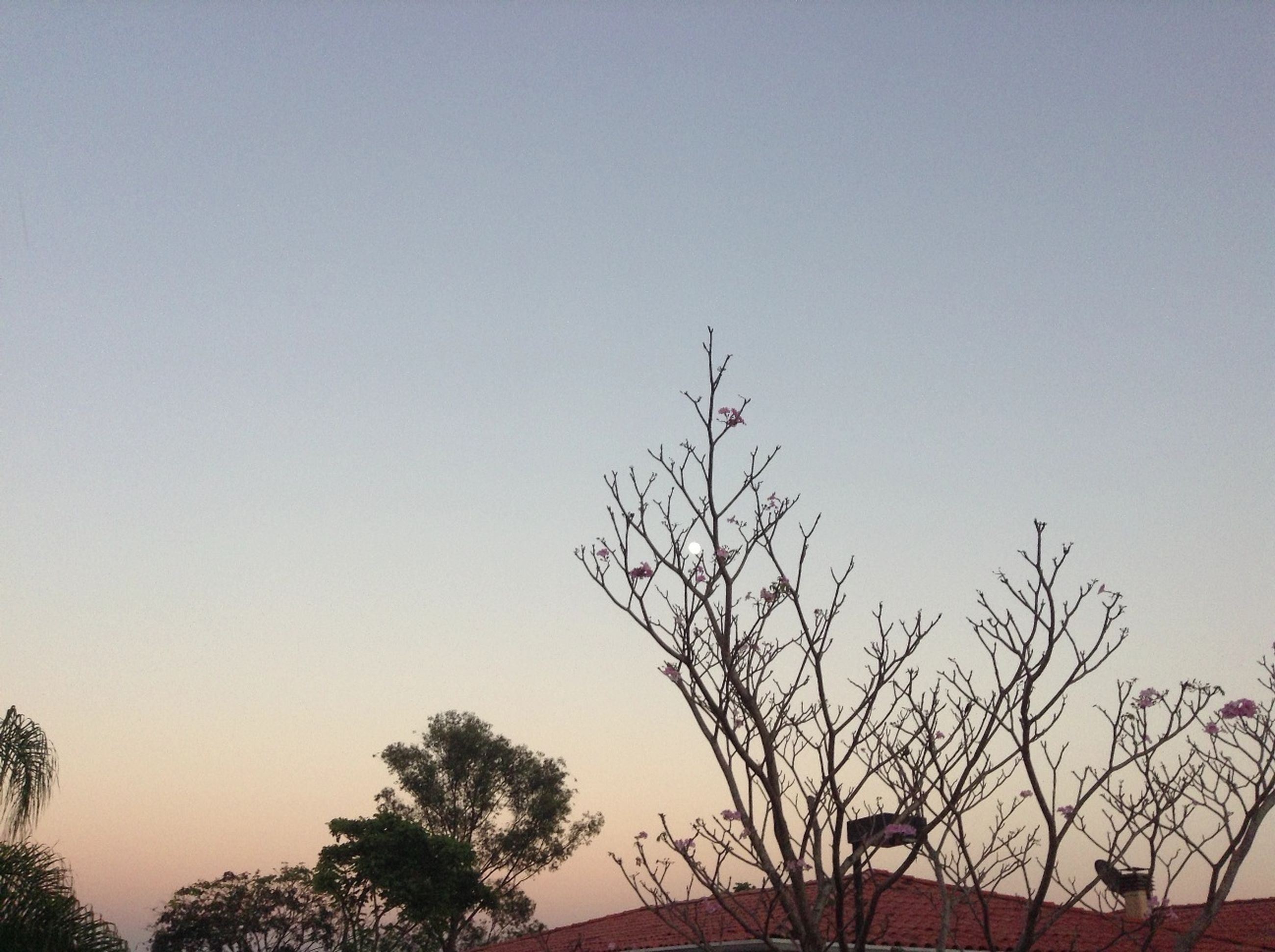 clear sky, tree, low angle view, copy space, branch, bare tree, silhouette, nature, tranquility, growth, beauty in nature, high section, scenics, sunset, outdoors, no people, tranquil scene, sky, dusk, treetop