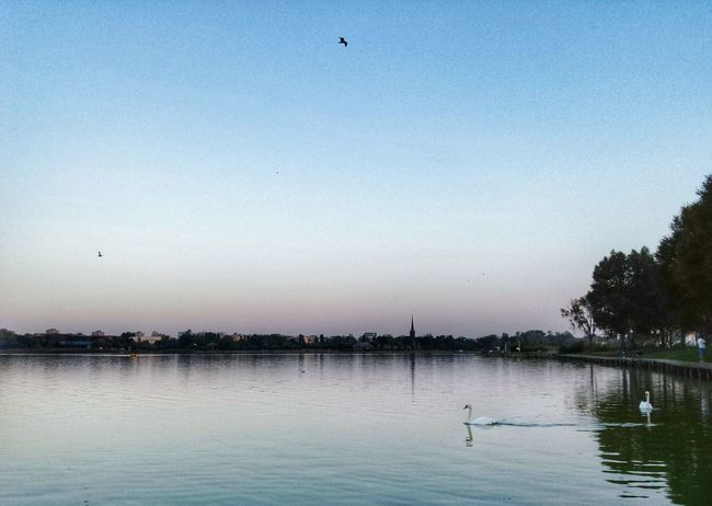 Urban Nature Lake Sunset Constanta Romania Tabacarie At The Park From My Point Of View Taking Photos Walking Around