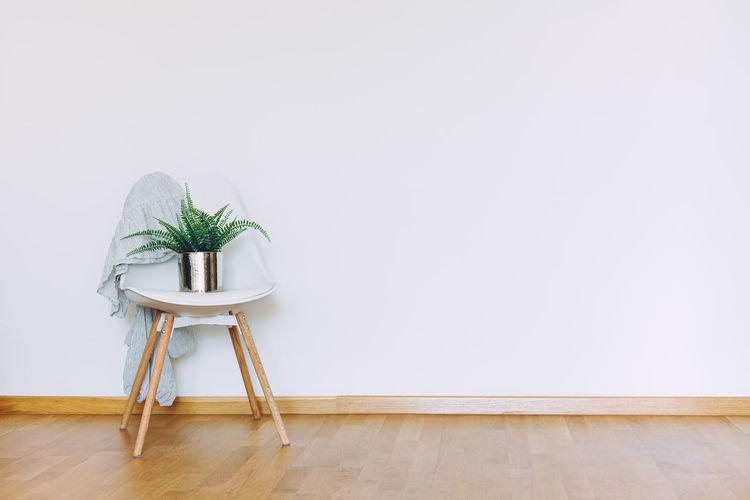 Potted plant on hardwood floor against wall