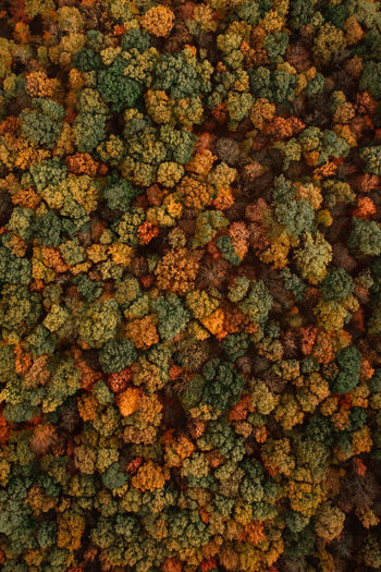 Fall Treetops at Twilight Aerial Shot Autumn Autumn Colors Autumn Leaves Fall Foliage Pennsylvania Trees Aerial Photography Aerial View Backgrounds Fall Full Frame Green Color Nature No People Pattern Textured