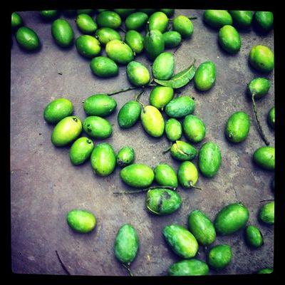 Mango Tree Home Chaktai Chittagong