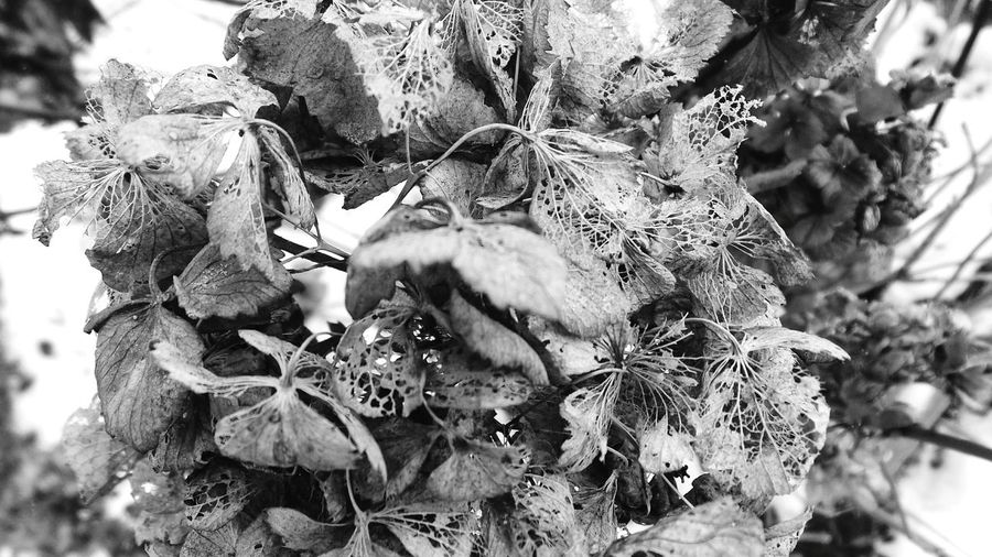 Nature No People Low Angle View Outdoors Leaf Close-up Flowers,Plants & Garden Winter Snow Full Frame Backgrounds Textures And Surfaces Macro_collection Ephemeral Textured  Fragility Abstract Nature Abstract Photography Macro Photography Blackandwhite Abstractions In BlackandWhite Black And White Collection  Dried Flowers Macro Beauty Large Group Of Objects