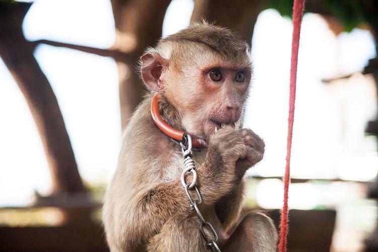 Monkey Business Monkey Thailand Wildlife Beautiful Nature Animals Captive