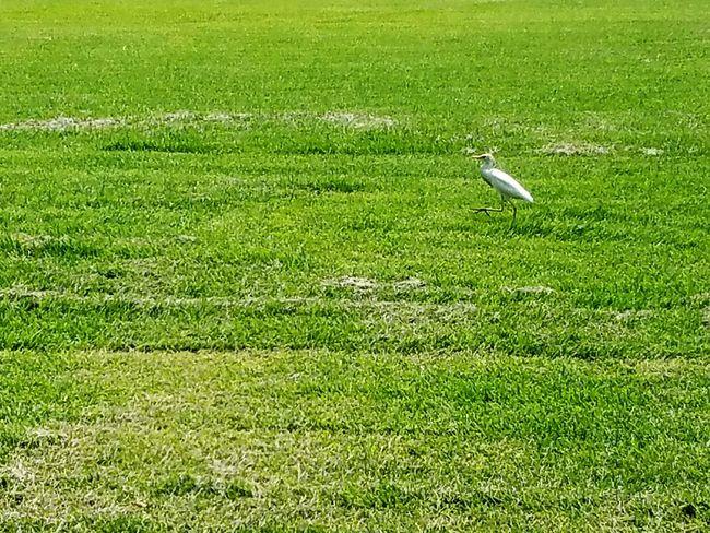 Eyeemphoto Grass Bird Egret