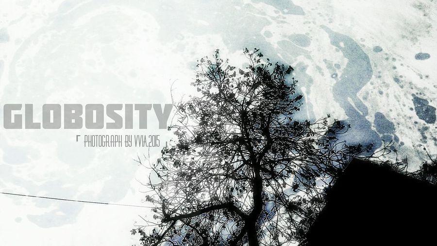 Globosity photograph by VviA Photograph By VviA TreePorn Globosity Earthday