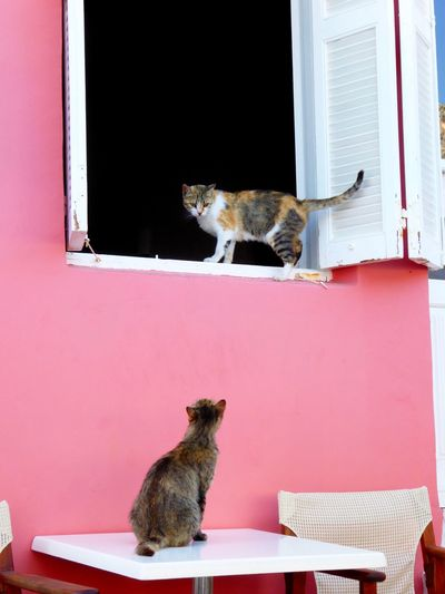 Cats Looking At Each Other At Pink Building