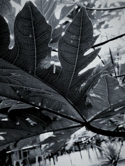 First Dark & White Leaf Outdoors Nature Plant Low Angle View