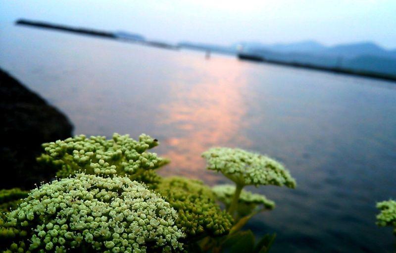 Twilight Miyazaki Kushima Flower Yuka  夕凪 Fresh Air Enjoying Life Relaxing Pray For Kyushu