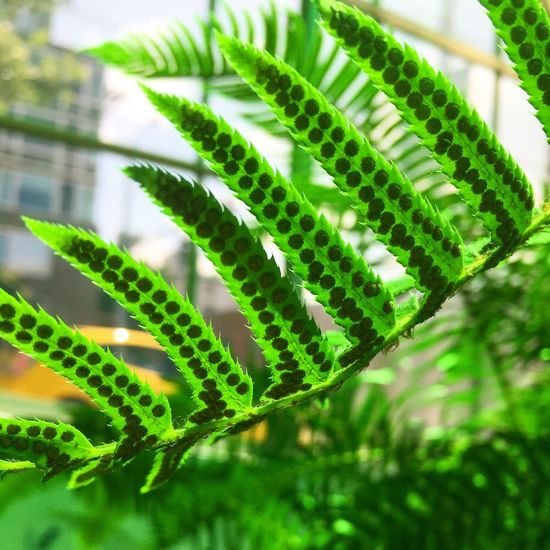 Fern sori Green Color Fern Nature Vivarium Art Olympic Sculpture Park Plant Growth No People Outdoors