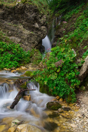 Beautiful view of Rio Arno waterfall in Abruzzo Abruzzo Creek Gran Sasso D'Italia Green Trekking Apennines Beauty In Nature Blurred Motion Cascade Europe Falling Water Flowing Water Gran Sasso Italy Landscape Long Exposure Motion Mountain Park Rock Rock - Object Scenics - Nature Stream Water Waterfall