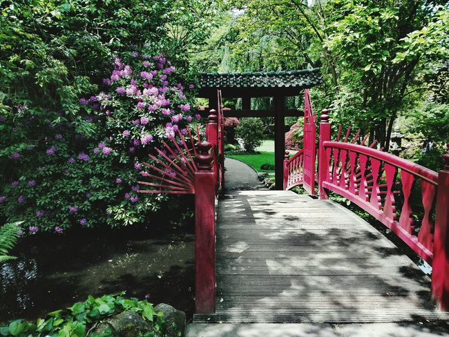 Japanischer Garten In Leverkusen Japanese Garden Germany🇩🇪 Tree Outdoors Nature Beauty In Nature Day Footbridge The Great Outdoors - 2017 EyeEm Awards Built Structure Landscape Tranquility Green Color Freshness Beauty In Nature Growth No People Nature Tree Grass Plant Water