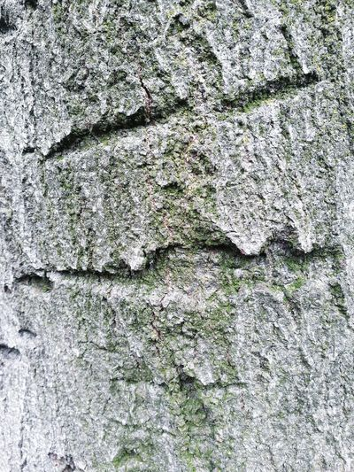 Tree Bark Textured  Faces In Things Abstract Rugged No People Surface Surfaces And Textures Backgrounds Full Frame Textured  Pattern Close-up LINE Rough Bark Detail