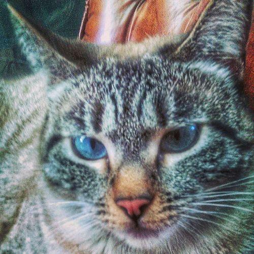 Cat Elgrafografo Tijuana