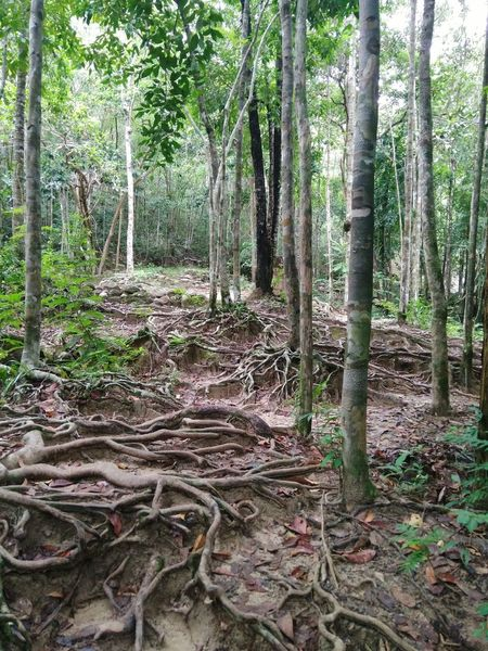 Roots Tree Forest Nature Beauty In Nature Root WoodLand No People Tree Area Jungle Jungle Waterfall In Thailand EyeEmNewHere Be. Ready. EyeEm Ready   AI Now