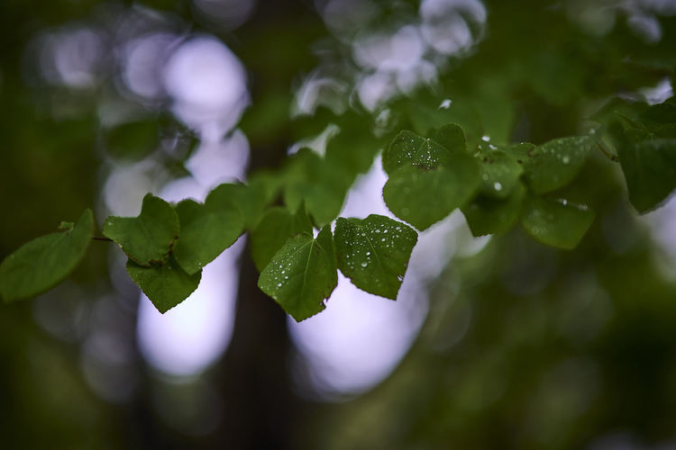 Close-up of wet leaves on plant