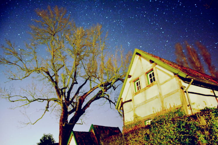 Tree Built Structure Architecture Building Exterior Plant Sky Low Angle View Building House Nature No People Branch Outdoors Night Growth Yellow Residential District Clear Sky Window
