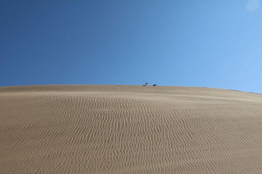 Namibia Namib Dunes Swakopmund Walvis Bay Namib Desert Namib Naukluft National Park NamibiaPhotography Dunes Namibia Landscape Deserts Around The World Desert Desert Landscape Namibian Landscape Namibian Sky Landscape_Collection