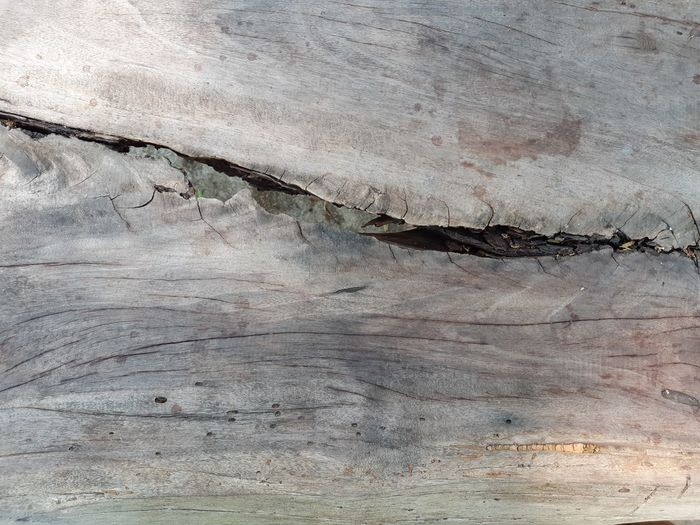 hard wood floor Wood Wooden Hard Wood Floor Hard Wood Old Objects Timber Backgrounds Textured  Abstract Full Frame Pattern Textured Effect Rough Close-up Grunge Woodpile Pile Knotted Wood Log Firewood Tree Ring Lumber Industry Deforestation Forestry Industry Stained