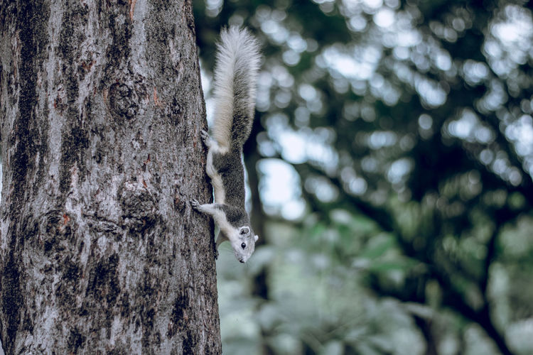 Tree Plant Animal Animal Themes Tree Trunk One Animal Animals In The Wild Close-up Nature Day Outdoors