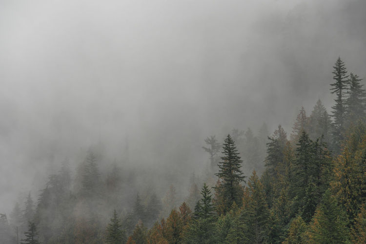 Nebel streift