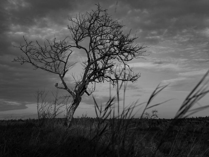 Monochrome Autumn Sky Outdoors Field Tree Black And White Cloud - Sky Nature Landscape Grass Botany