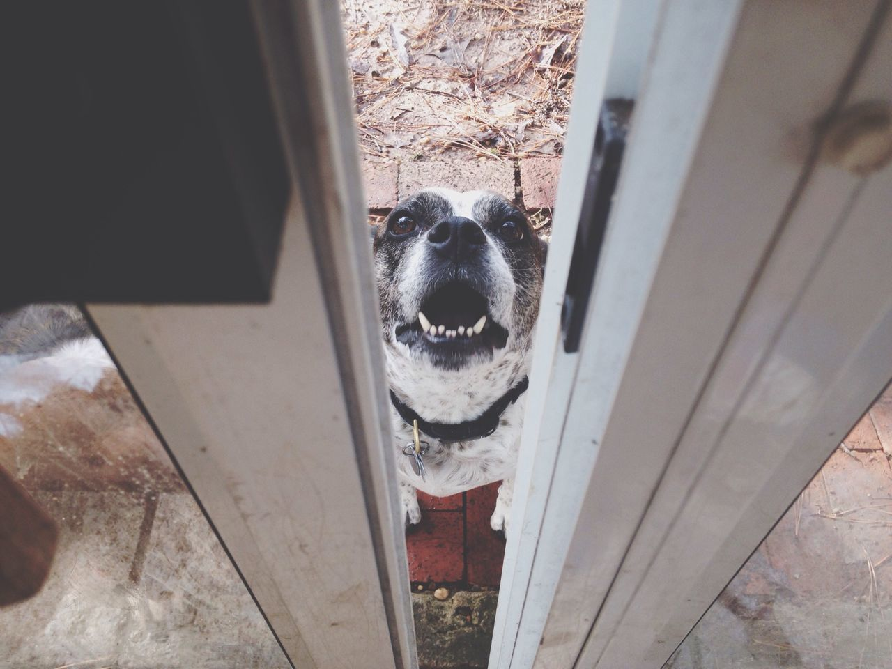 Dog With Open Mouth Behind Door
