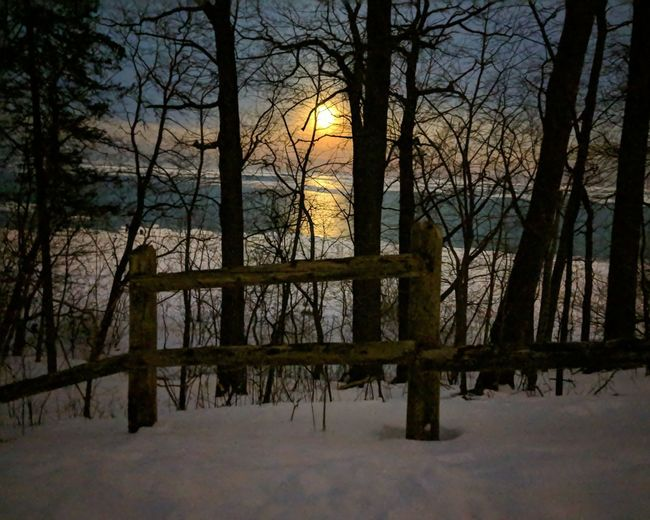 Bare trees on snow covered land during sunset