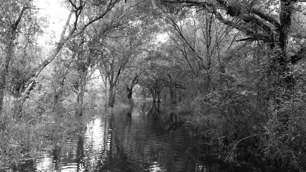 walking up the flooded driveway to higher drier ground Black And White Photography Canopy Of Trees Canopy Walk Flood Photography Flooding Oak Hammock Oak Trees Tree Tunnel