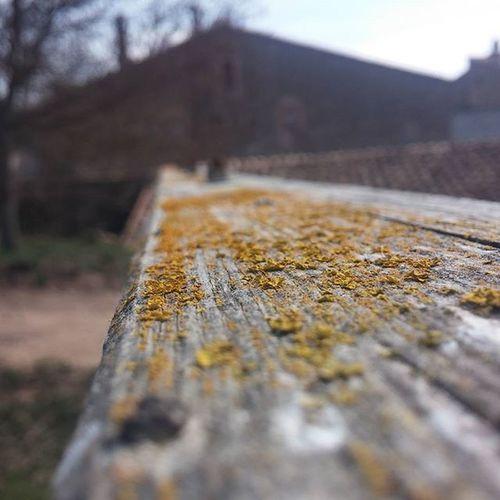 Old Wood Oldwood Macro Viga Rural Turismerural Casarural Inthecamp House Masia Berguedà Catalunya Catalonia