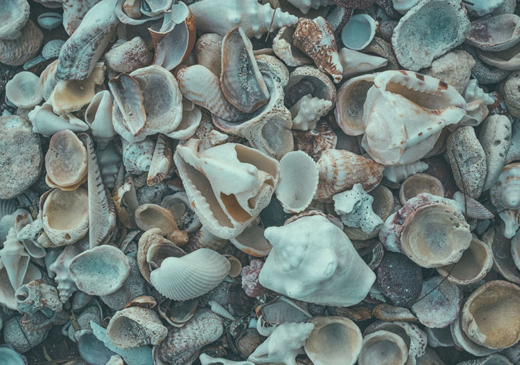 Made by the Sea Abundance Backgrounds Beauty In Nature Close-up Colorful Conch Shells Day Full Frame Large Group Of Objects Nature Nature Photography No People Ocean Outdoors Pebble Pebble Beach Photographyisthemuse Seashell