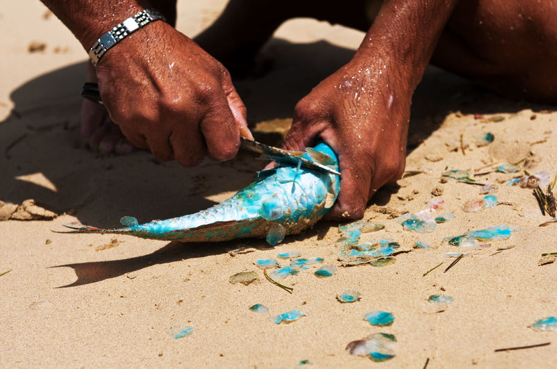 Man gutting fish on beach
