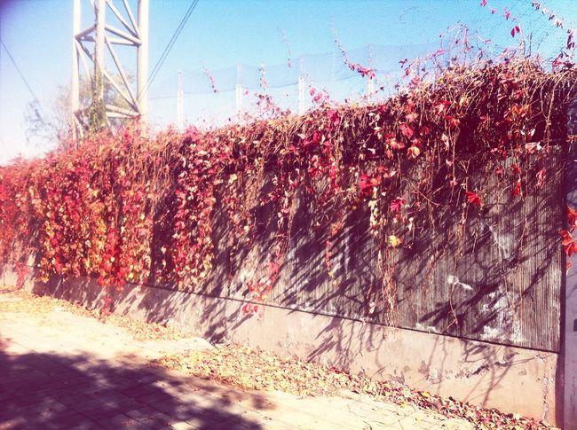 Hello World 秋天和冬天交界了,我把我爱的颜色用记忆带走。