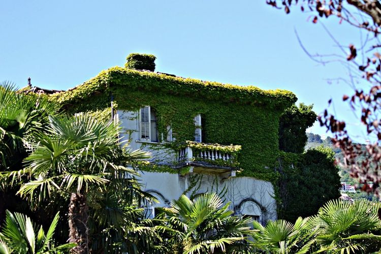 some greenery Lago Maggiore Old House