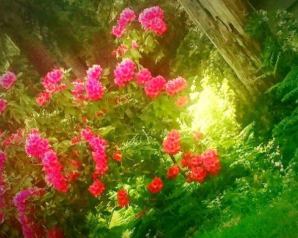 Spring 💘 Flowerporn Spring Flowers Spring2015 Beautiful Surroundings EyeEm Nature Lover Beautyineverydaythings Seeking BEAUTY ♡ Enjoying Life Eye4photography  EyeEm Best Shots