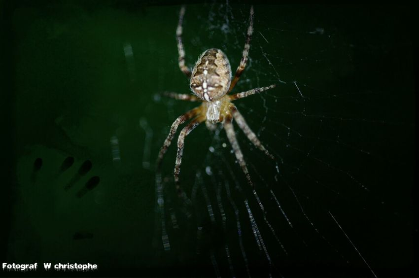 Spinne Marco_collection Macro PhotographySpider