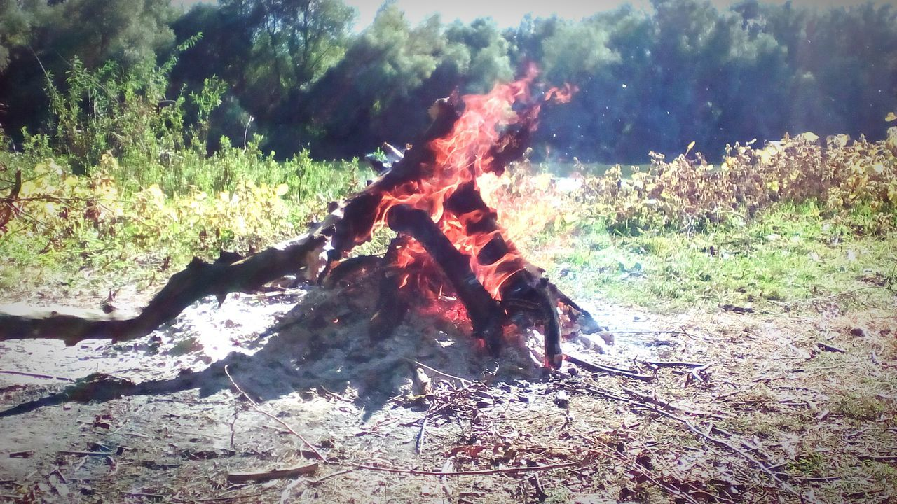 burning, nature, day, no people, outdoors, field, flame, tree, grass, close-up, mammal