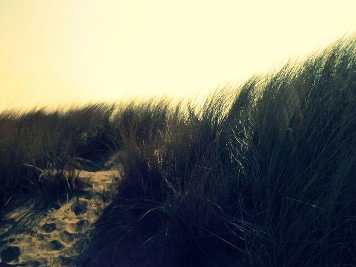 Beach Ending The Day EyeEm Nature Lover