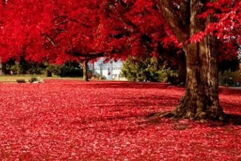Nature Photography Red Hot