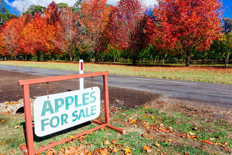 Stanley, Victoria Sale Apples Apples For Sale Autumn Capital Letter Change Communication Day Guidance Information Information Sign Land Leaf Nature No People Outdoors Plant Road Sign Text Transportation Tree Warning Sign Western Script