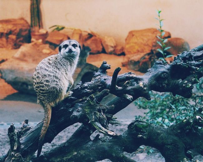Animal Themes Nature Zoo Animals  First Eyeem Photo Krakow