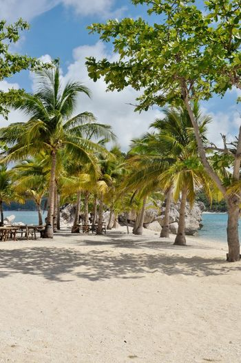 Para Para Paradise... Beachin'