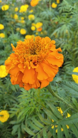 AI Now! Flower Nature Plant Petal Yellow Flower Head Beauty In Nature